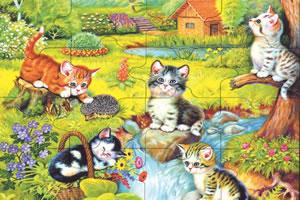 猫咪的全家福