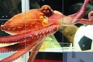 章鱼保罗拼图