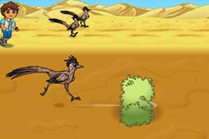 沙漠火鸡赛跑