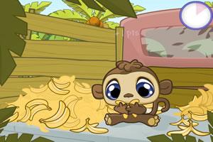 完美国际小猴子表情_小猴吃香蕉,小猴吃香蕉小游戏,4399小游戏 www.4399.com