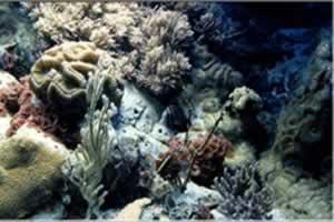 神奇海底拼图