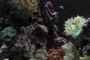 珊瑚礁拼图