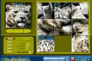 雪豹拼图游戏