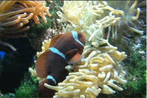 海葵与鱼拼图