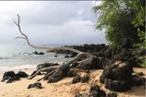 海滩枯树拼图