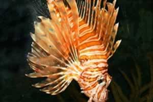 美丽鱼类拼图