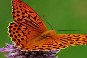 蝴蝶找宝石