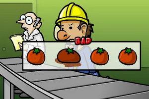 当番茄挑拣工