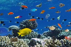 深海彩色鱼