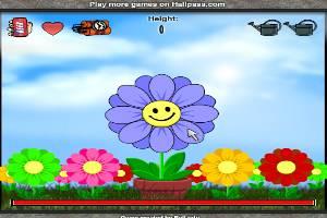 种鲜花!你能种多高?