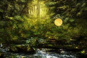 森林中寻宝