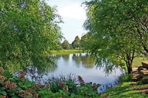 绿色池塘拼图