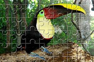 大嘴鸟拼图