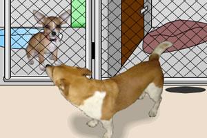 动物收容所逃脱