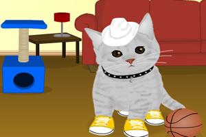 猫咪的新装