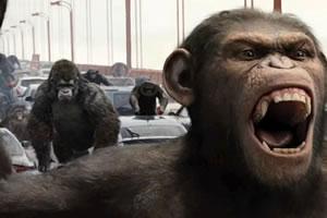 黑猩猩找字母