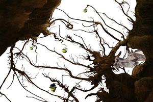古老的树根