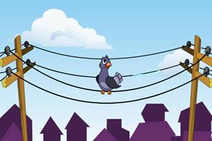 电线杆上的鸽子