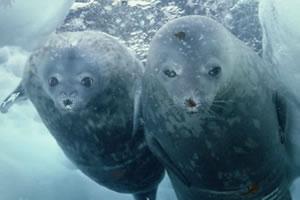 海狮找动物