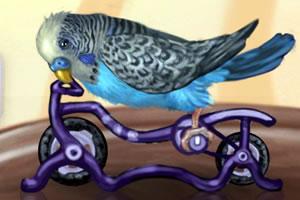 我的小鹦鹉