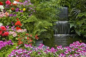 多彩花园找金币
