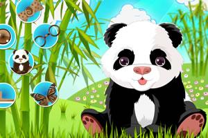 肥嘟嘟小熊猫
