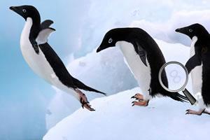 欢乐企鹅找数字