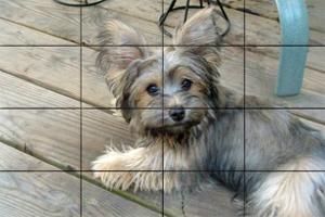 小狗狗拼图