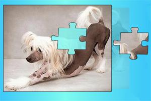 宠物狗拼图