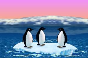企鹅的梦想