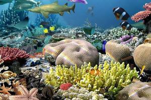 海底世界找东西