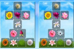 多彩鲜花找茬