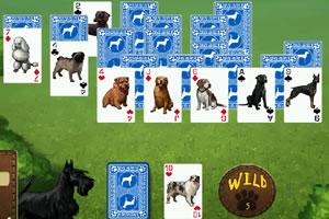 小狗纸牌接龙