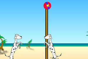 斑点犬玩排球