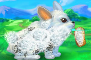 我的可爱小兔子