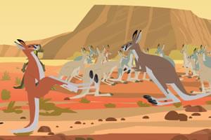 澳洲袋鼠拳击赛