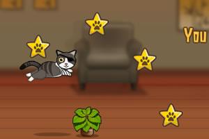 一只特立独行的猫