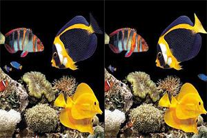 海底生物找茬