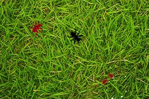 蚂蚁争夺王位