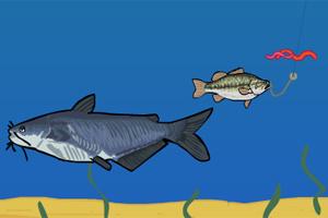 小鲈鱼逃生2