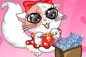 打扮可爱小猫