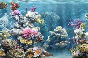 海洋深处找东西