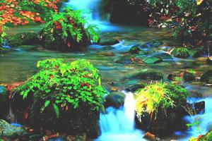 瀑布图片找东西