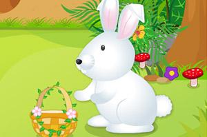 照顾可爱的小白兔