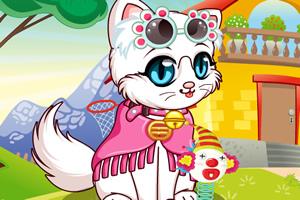 可爱波斯猫