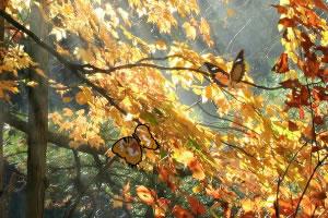 秋季森林找蝴蝶