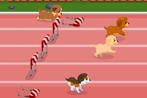 小狗障碍赛跑