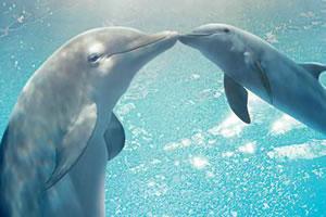 海豚的故事2找字母