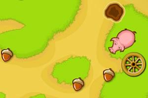 小猪来觅食