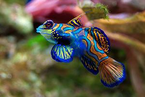 水族馆鱼类拼图2